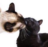 Het kussen van ?ats Royalty-vrije Stock Afbeeldingen