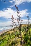 Het kustlandschap van de zomernieuw zeeland Royalty-vrije Stock Afbeeldingen