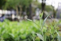Het kweken van bloemen in tuinen royalty-vrije stock afbeelding