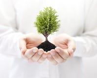 Het kweken van boom in handen royalty-vrije stock foto's