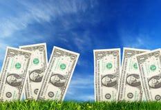 Het kweken van geld Stock Foto's