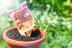 Het kweken van geld in bloempotten Royalty-vrije Stock Fotografie