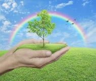 Het kweken van groene boom overhandigt binnen groen gras met blauwe hemel, clou Royalty-vrije Stock Foto