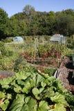Het kweken van groenten in een toewijzing Royalty-vrije Stock Foto