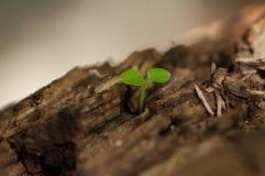 Het kweken van installatie op hout Royalty-vrije Stock Foto