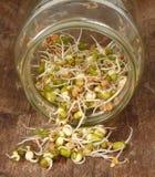 Het kweken van spruiten stock foto's