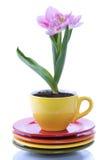 Het kweken van tulp in een kop stock foto