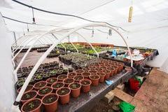 Het kweken van zaailingen in potten Plant het zaaien in moderne plantkundeserre, tuinbouw en cultuur van sierplannen royalty-vrije stock afbeeldingen