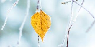 Het laatste blad op de berk in de winter Vorst op trees_ royalty-vrije stock afbeeldingen