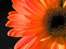 Het laatste bloeien Royalty-vrije Stock Afbeeldingen