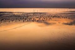 Het laatste licht op het strand wanneer het water daalt, zijn er vogels die vissen met oranje licht eten Stock Foto's