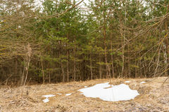 Het laatste sneeuwflard, een donkere dag van de lente in het bos, van de gesmolten sneeuw u kan het droge de herfstgras zien Stock Afbeeldingen