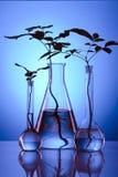 Het laboratorium van Ecologic stock afbeeldingen