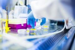 Het laboratoriumwerk met cellen en weefselculturen in Flowbox Stock Foto