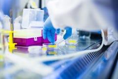 Het laboratoriumwerk met cellen en weefselculturen in Flowbox Stock Foto's
