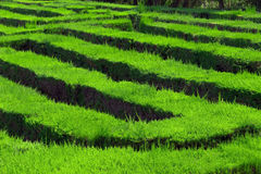 Het labyrint Barcelona van het park Stock Afbeelding