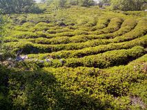 Het labyrint van de steen van het Eiland van Bolshoi Zayatsky Het witte Overzees, Solovetsky Eilanden, Kareli?, Rusland stock foto