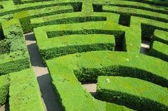 Het labyrint van hagen Stock Foto's