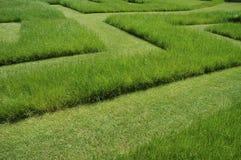 Het labyrint van het gras Royalty-vrije Stock Afbeelding
