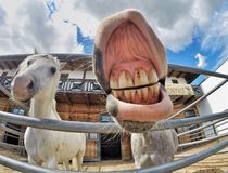 Het lachen, jawning paard Royalty-vrije Stock Fotografie