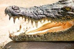 Het lachen Krokodil tanden en krokodilhoofd royalty-vrije stock fotografie