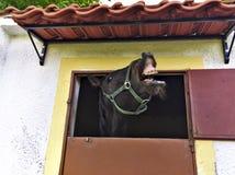 Het lachen paard stock foto's