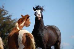 Het lachen paarden royalty-vrije stock afbeelding