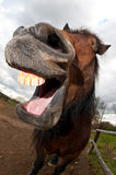 Het lachen van het paard Royalty-vrije Stock Afbeeldingen