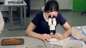 Het lage schoolmeisje die de steekproef bestuderen onder de microscoop 4K stock videobeelden