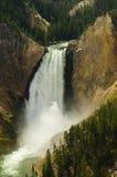 Het lagere Nationale Park van Yellowstone van Dalingen stock foto