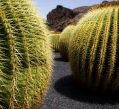Het land van de cactus Stock Foto's