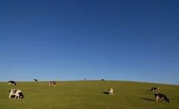 Het Land van de heuvel Royalty-vrije Stock Afbeeldingen