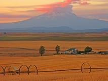 Het Land van de Tarwe van MT Adams Stock Fotografie