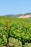 Het Land van de wijn Royalty-vrije Stock Afbeelding
