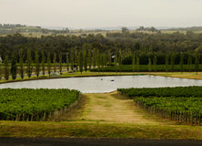 Het land van de wijn Royalty-vrije Stock Foto's