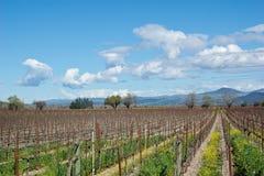 Het land van de wijn Stock Foto
