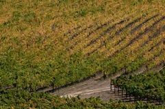 Het Land van de Wijn van Californië Royalty-vrije Stock Foto's
