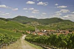Het Land van de Wijn van het palatinaat stock foto