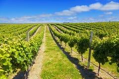 Het Land van de Wijn van Nieuw Zeeland Royalty-vrije Stock Foto