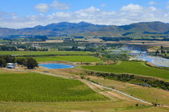 Het Land van de Wijn van Nieuw Zeeland Royalty-vrije Stock Foto's
