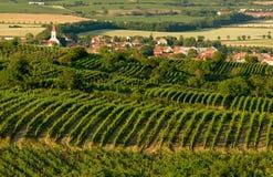 Het land van de wijngaard stock foto