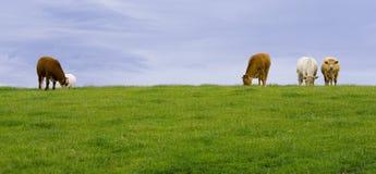 Het land van Galway - Ierland Stock Afbeelding