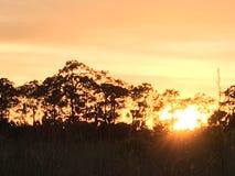 Het Land van het Evergladesmoeras in Everglades Florida Royalty-vrije Stock Foto's