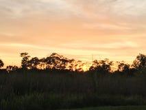 Het Land van het Evergladesmoeras in Everglades Florida Royalty-vrije Stock Afbeelding