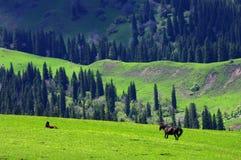 Het land van het gras in Xinjiang Stock Afbeeldingen