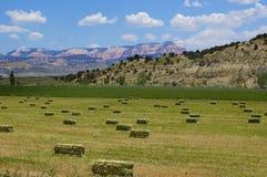 Het land van het landbouwbedrijf Royalty-vrije Stock Fotografie