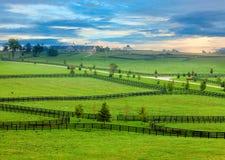 Het land van het paard Stock Fotografie