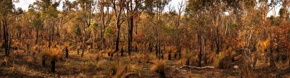Het Land van westelijk Australië Royalty-vrije Stock Fotografie