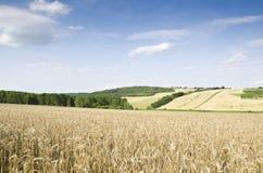 Het landachtergrond van de tarwe Royalty-vrije Stock Afbeelding