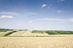 Het landachtergrond van de tarwe Stock Afbeelding